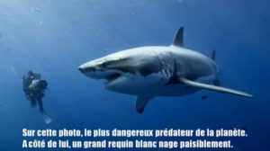 Supposition requin